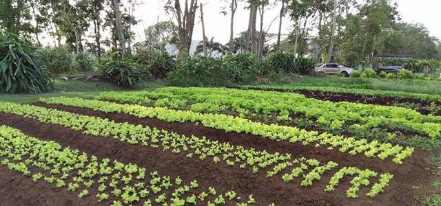 The Farm 02