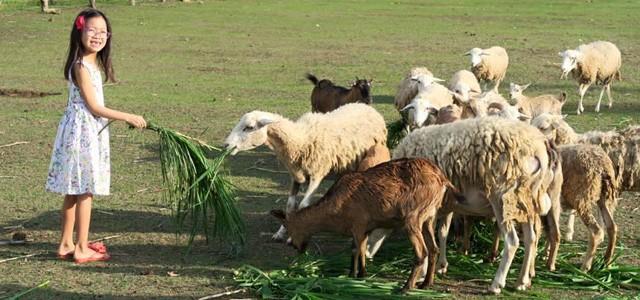 The Farm 03