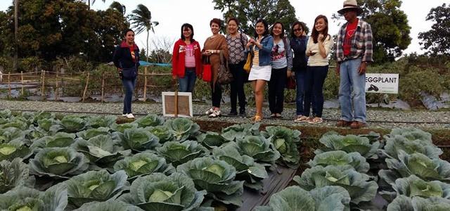 The Farm 06